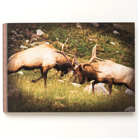 """Fighting Elk"" Wall Art"