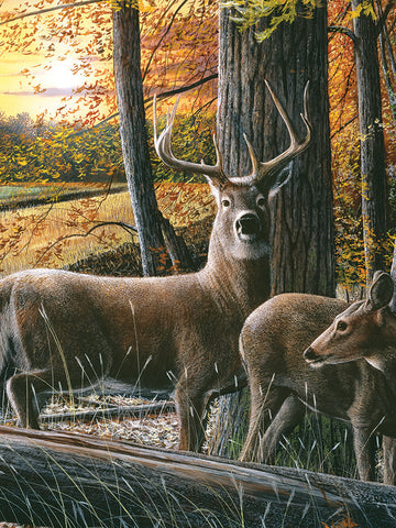"""Autumn Whitetails"" LED Art - 16"" x 12"""