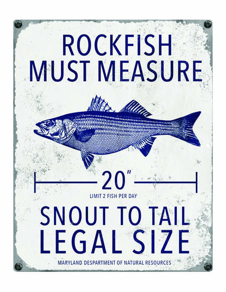 Maryland rockfish fishing regulations ocean drive for Maryland fishing license