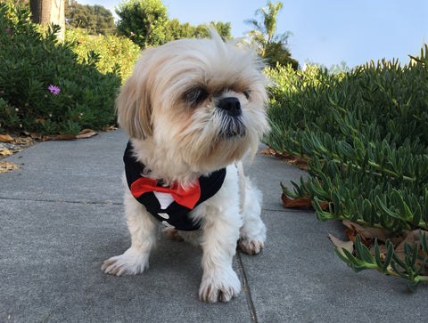 FREE Tuxedo & Bowtie Mesh Harness Vest with leash