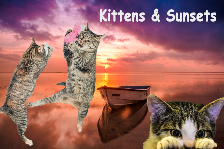 Kittens and Sunsets
