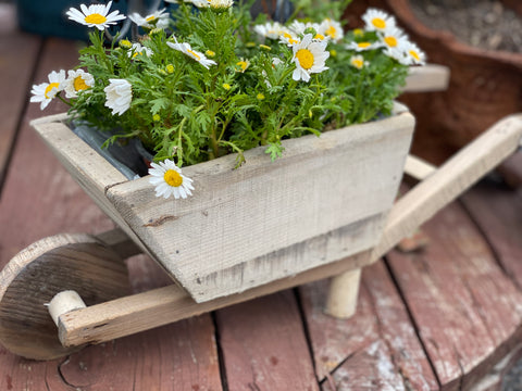 Small Timber Wheel Barrow Planter