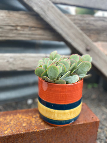 The TRIO Navy Stripe Planter