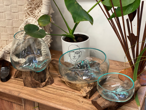 Glass Terrariums IN STORE ONLY