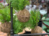 Hanging Fern JUTE Ball