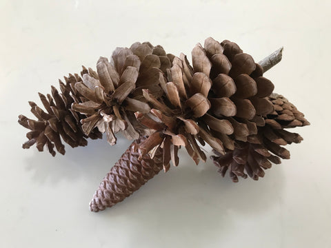 REAL Pine Cone Table Decor
