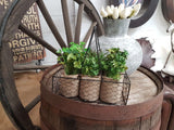 Set of 6 HERBS in Wire Carry Basket