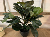 Faux Fiddle Leaf FIG Plant and Pot