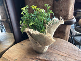 Faux Green Plant in Hessian