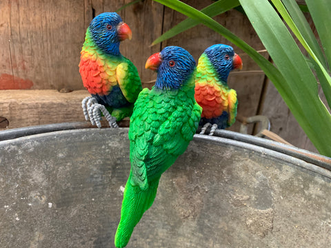 Set of 3 LORIKEETS