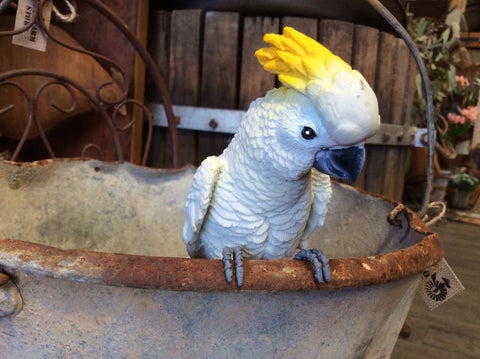 Aussie Cockatoo Pot Sitter