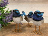 LARGE Fairy Wrens x 3