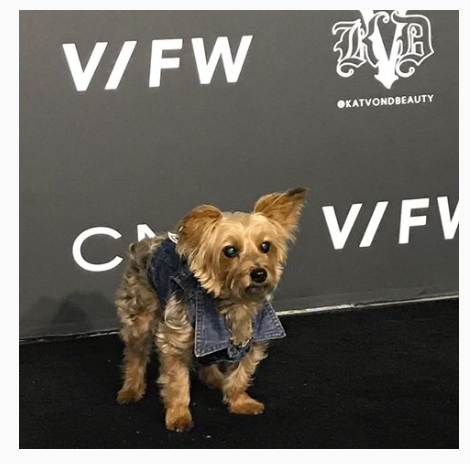 Vegan Fashion Week Dog