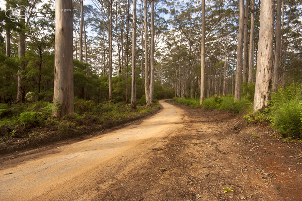 Boranup Forest - SW4003
