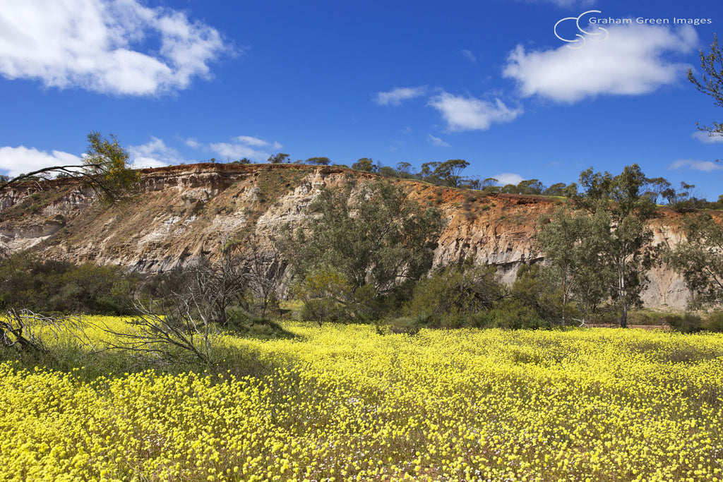 Wildflowers, Coalseam - WF5001