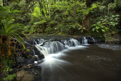 Forest Stream, NZ - NZ4004