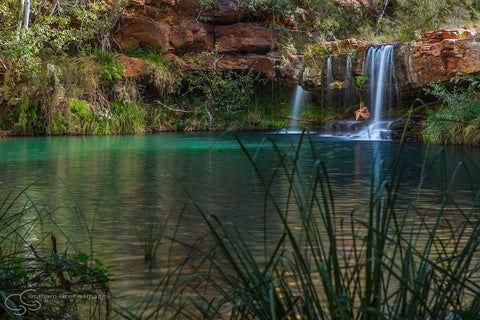Fern Pool, Karijini - KJ7003