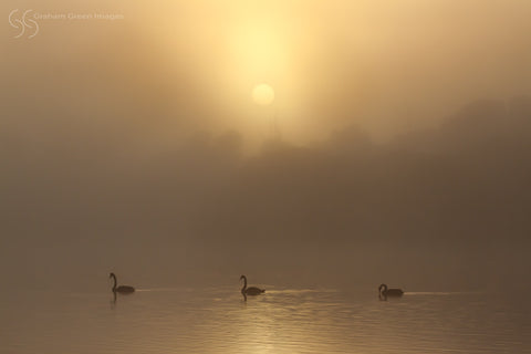 Foggy Morning, Lake Joondalup - JN4102