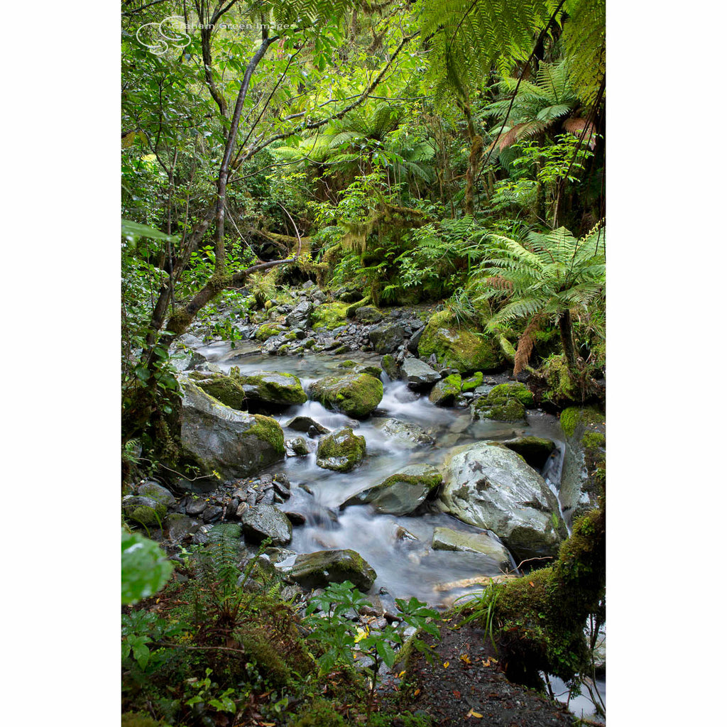 Mountain Stream, NZ - NZ4025