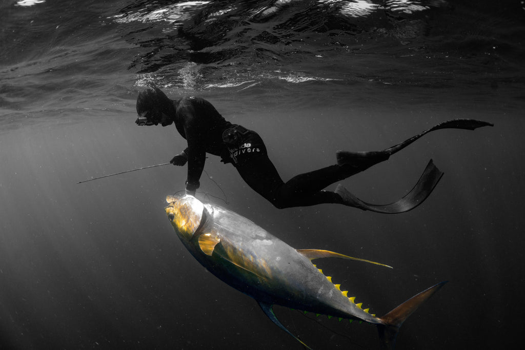 Hunting Giant Yellowfin