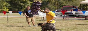 The Importance of Dog Shows