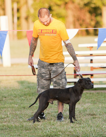 Canine Athletes CH Vito - 2015 ADBA Top Ranked Conformation Dog