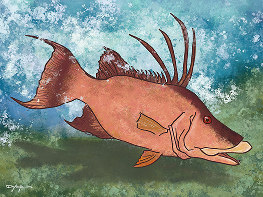 Hogfish with Blues and Greens Fine Art Canvas