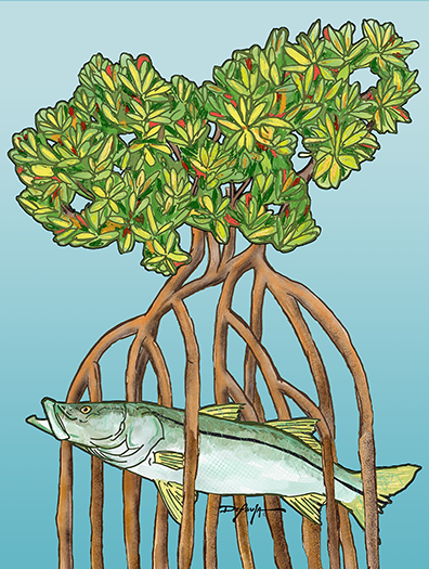 Snook in the Mangroves Fine Fish Art Canvas Print