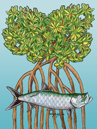 Tarpon in the Mangroves Fine Fish Art Canvas Print