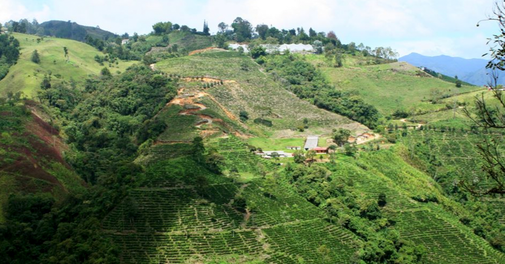 Farm hills of Colombia, South America where coffee is grown.