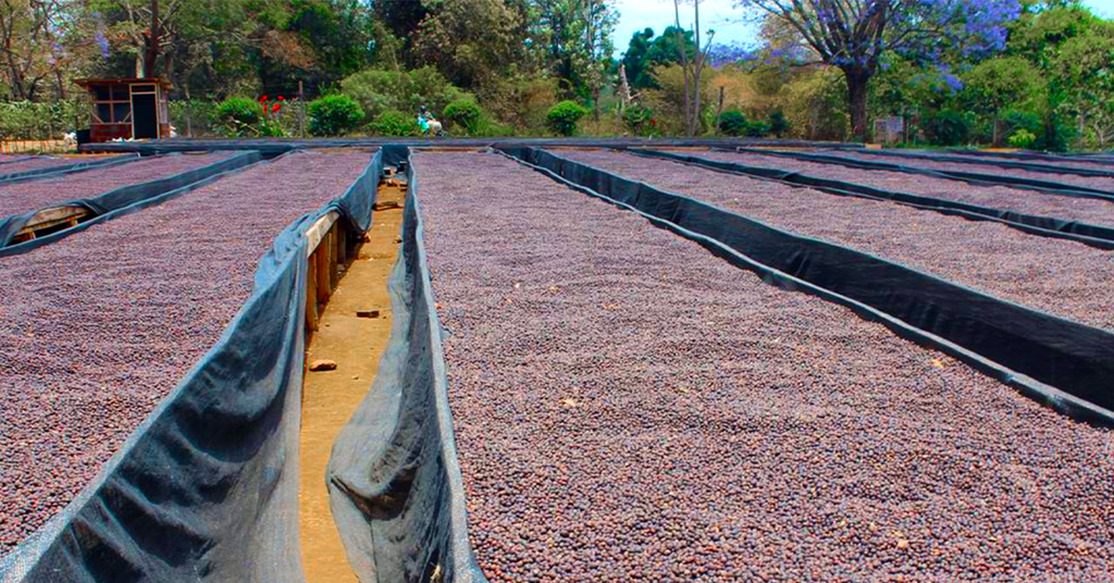 Tanzania Peaberry Coffee, Sun Dried