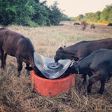 Ground Mineral Feeder Feeding Black Calves