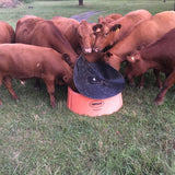 Orange Mineral Feeder for Cattle