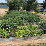 Community Metal Garden Beds for Vegetables