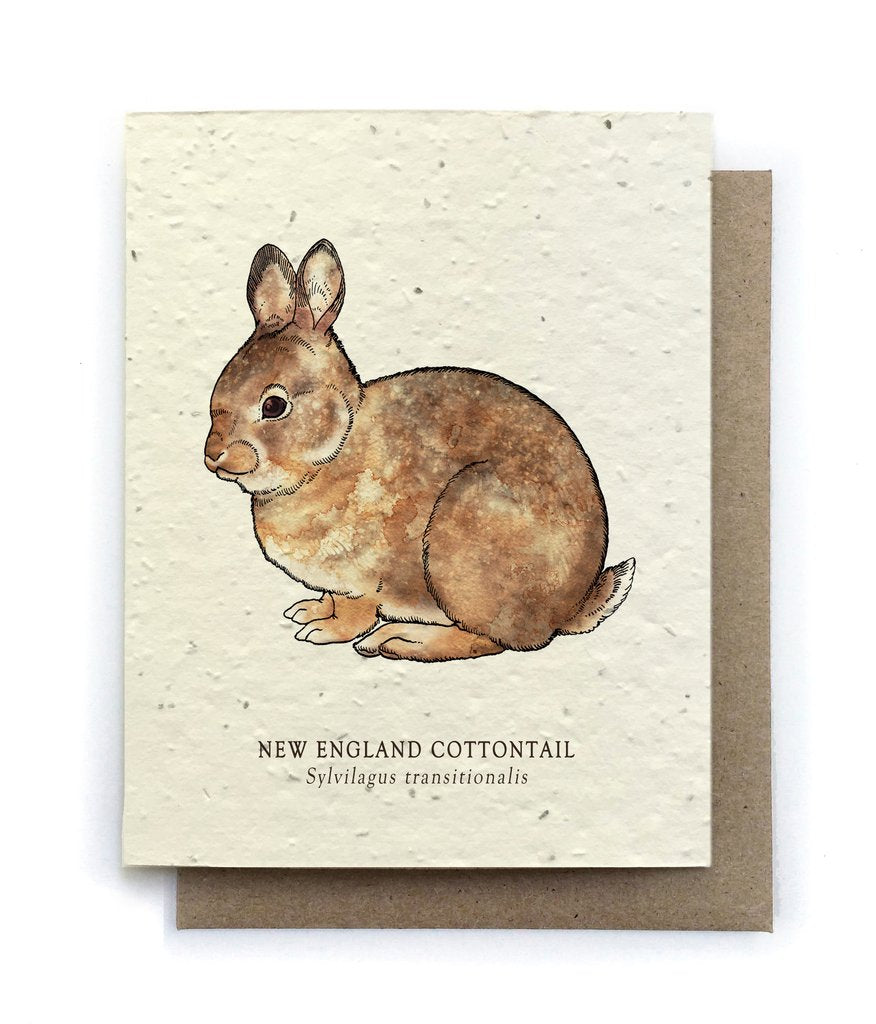 The Bower Studio - Cottontail Rabbit Greeting Cards - Plantable Seed Paper - Notecard - Stomping Grounds