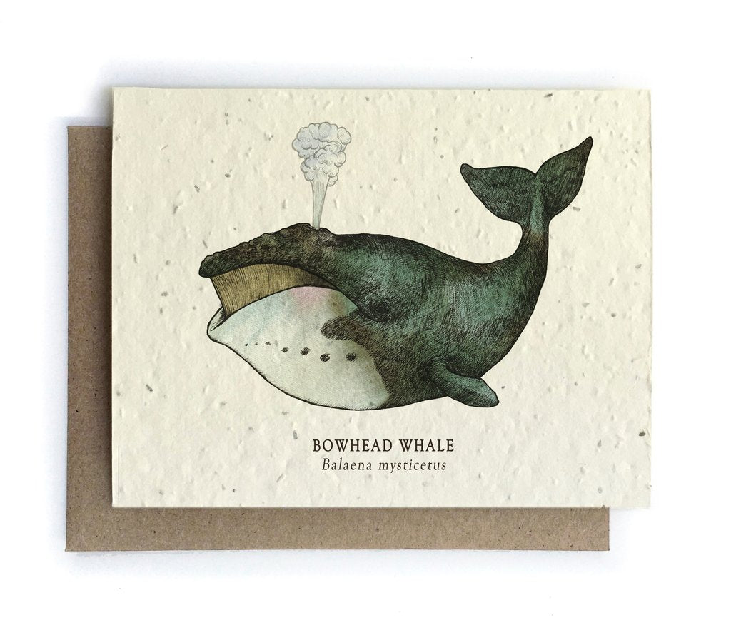 The Bower Studio - Whale Ocean Greeting Cards - Plantable Seed Paper - Notecard - Stomping Grounds