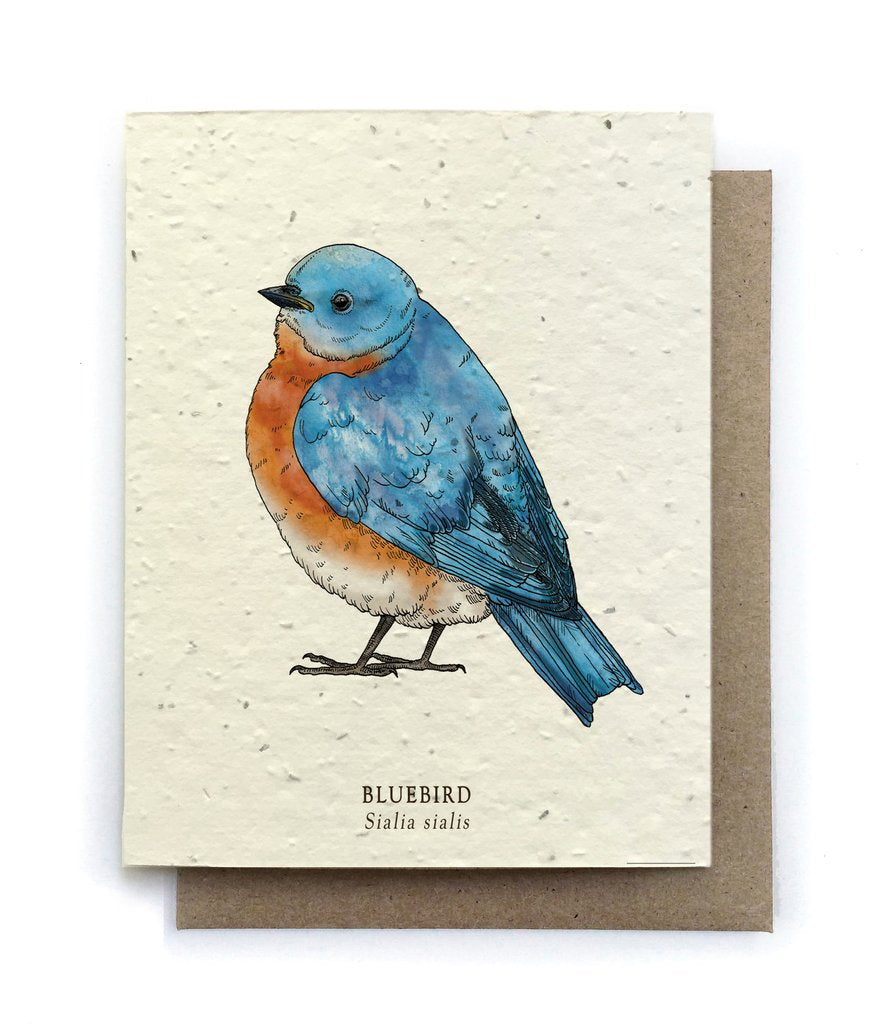 The Bower Studio - Bluebird Bird Greeting Cards - Plantable Seed Paper - Notecard - Stomping Grounds