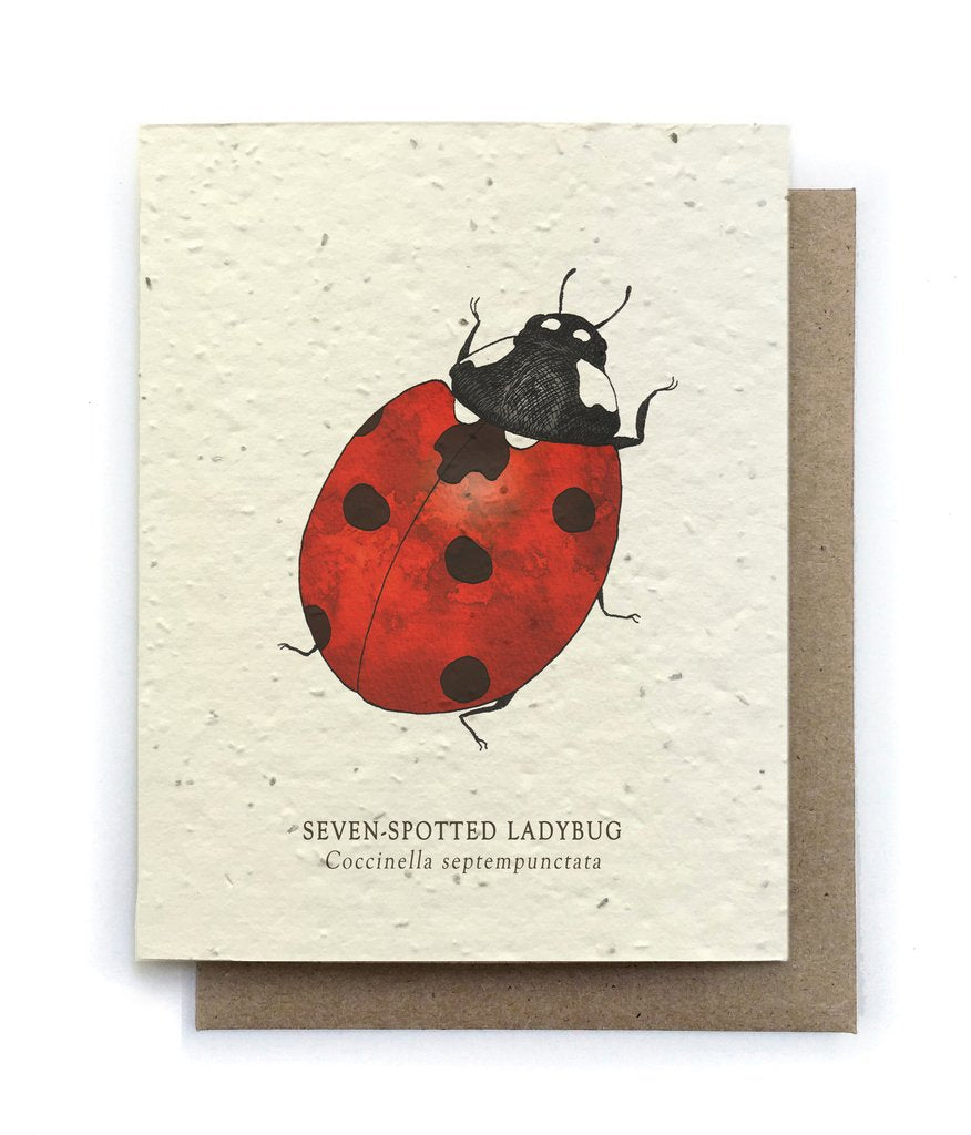 The Bower Studio - Ladybug Insect Greeting Cards - Plantable Seed Paper - Notecard - Stomping Grounds