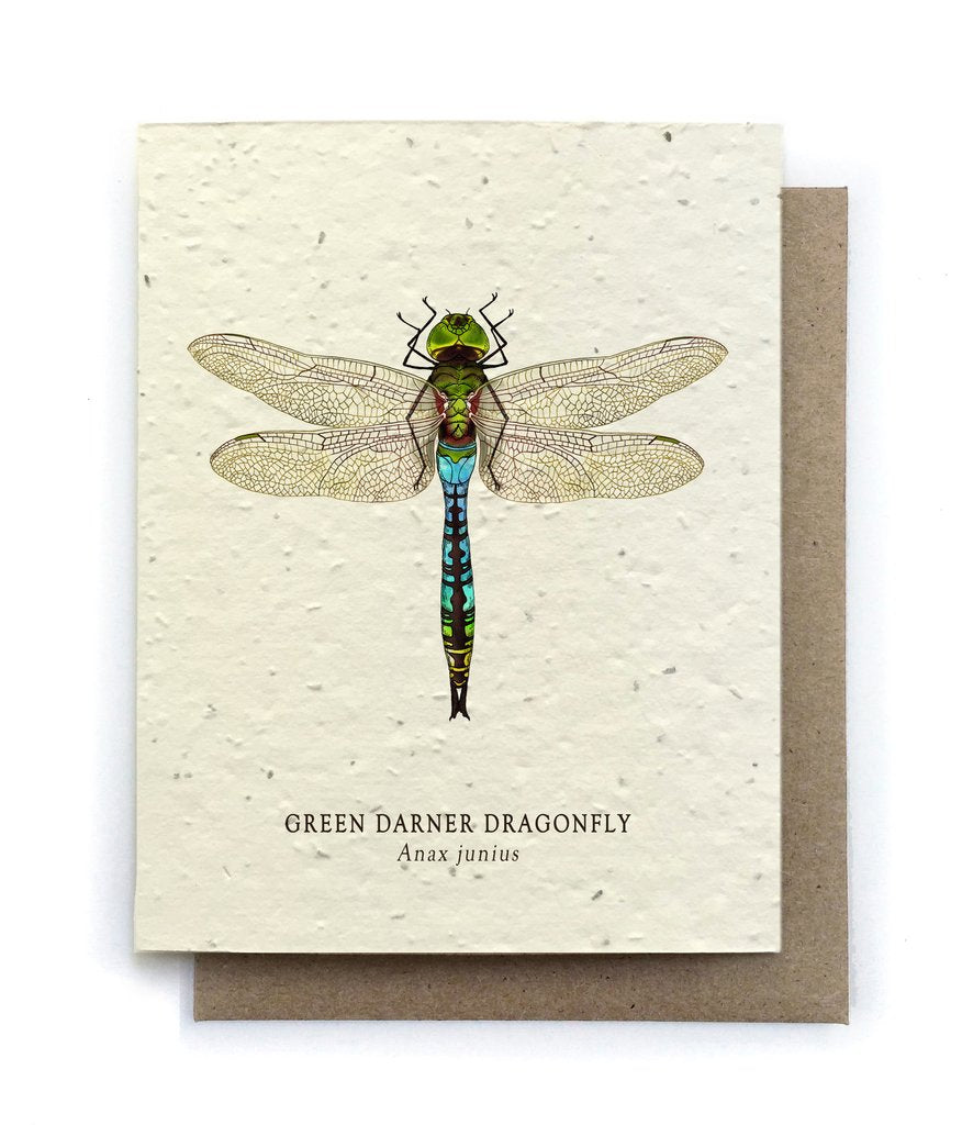 The Bower Studio - Dragonfly Insect Greeting Cards - Plantable Seed Paper - Notecard - Stomping Grounds