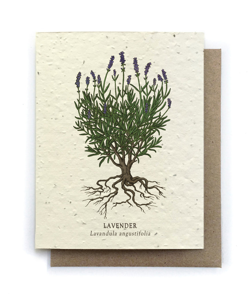 The Bower Studio - Lavender Botanical Greeting Cards - Plantable Seed Paper - Notecard - Stomping Grounds