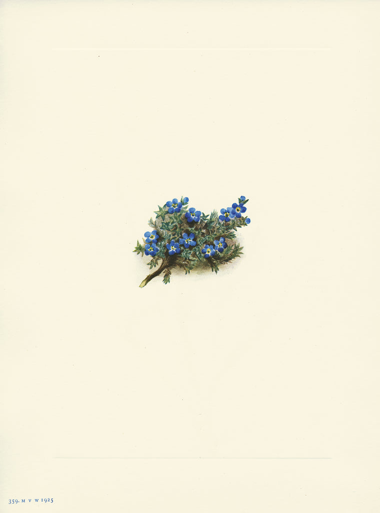 Moss Forget Me Not - Print - Stomping Grounds