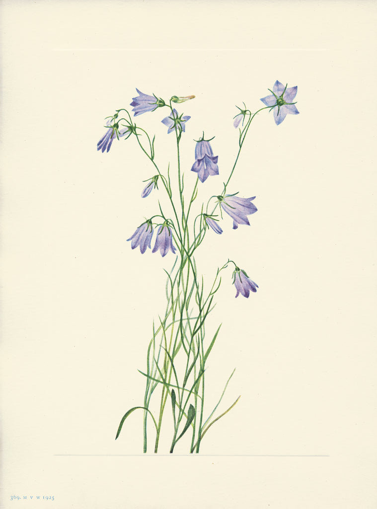 Harebell - Print - Stomping Grounds