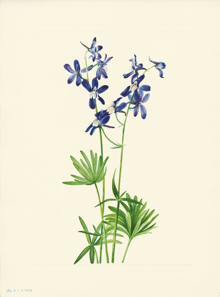 Slim Larkspur - Print - Stomping Grounds