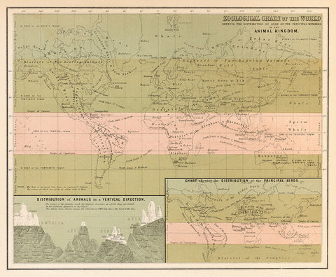 Zoological Chart of the World