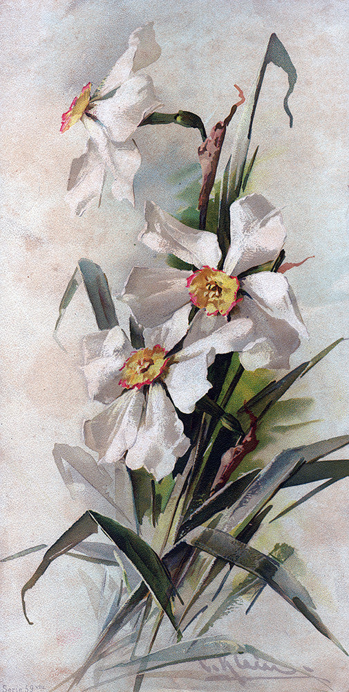 White Floral Painting - Print - Stomping Grounds