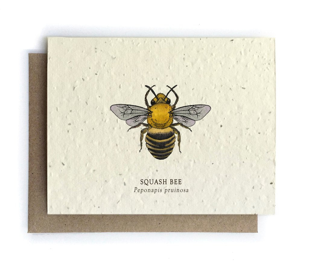 The Bower Studio - Squash Bee Greeting Cards - Plantable Seed Paper - Notecard - Stomping Grounds