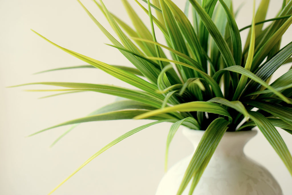 How Plants Improve Your Spaces