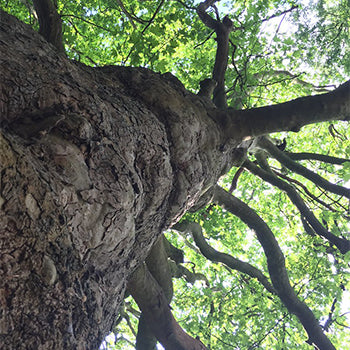 Celtic Tree of Life | Gifts of Ireland