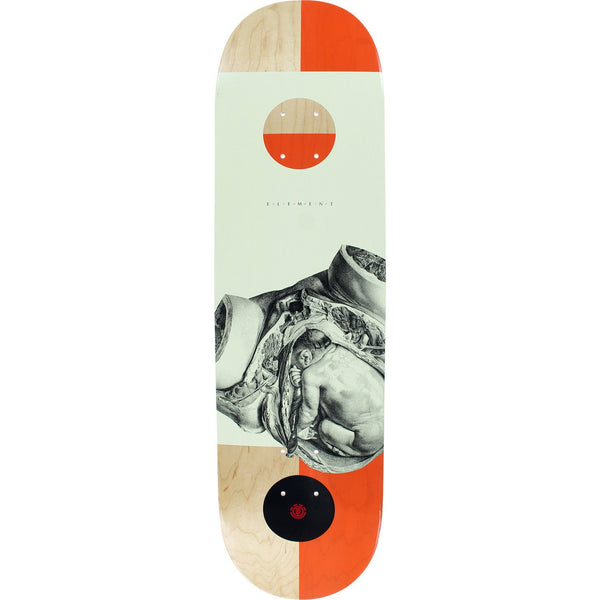 Tabla Element Zygote Begin 8.5 Deck - Furtivo Skateboarding