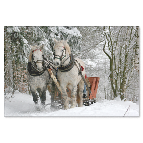 Percheron's In Snow Pulling Sleigh - Canvas Print